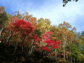 白樺峠の紅葉