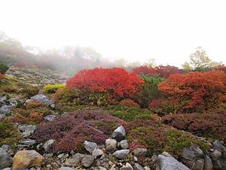 森林限界の紅葉