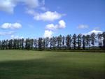 北海道 美瑛の並木