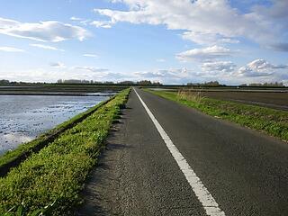 仮設自転車道の田んぼ